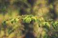 Картинка листья, иголки, ветка, зеленые