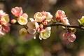 Картинка ветка, цветочки, цветение, нежно, листики