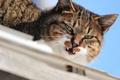 Картинка кот, глаза, кошак, взгляд, усы