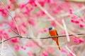 Картинка ветки, природа, птица, сад
