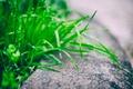 Картинка трава, зеленая