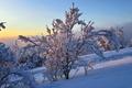 Картинка зима, снег, пейзаж