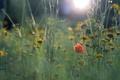 Картинка луг, цветы, трава, поле