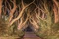 Картинка дорога, деревья, ночь