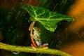 Картинка зеленая, frog, orange, beauty, держаться, umbrella, leave
