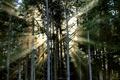 Картинка осень, лес, свет, природа, туман