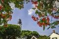 Картинка маяк, цветы, деревья, небо
