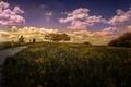 Картинка небо, трава, Природа