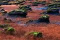 Картинка трава, камни, мох, долина