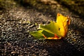Картинка осень, макро, лист
