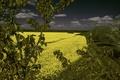 Картинка облака, рапс, деревья, поле, небо, цветы
