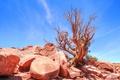 Картинка небо, камни, дерево, пустыня