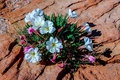 Картинка цветы, скала, камень, растение
