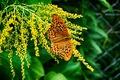 Картинка цветы, бабочка, боке