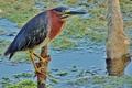 Картинка птица, вода, ветка, клюв