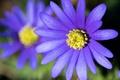 Картинка цветок, природа, растение, лепестки