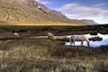 Картинка природа, озеро, кони