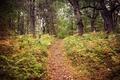 Картинка деревья, путь, осень, лес, листья