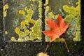 Картинка природа, лист, мох