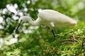 Картинка лес, природа, дерево, green, птица, белая, white