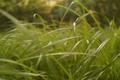 Картинка трава, макро, размытие