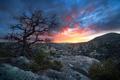 Картинка горы, природа, дерево, утро