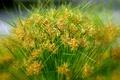 Картинка трава, макро, растение