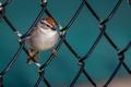 Картинка природа, птица, забор