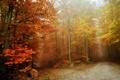 Картинка туман, дороги, осень, лес