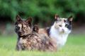 Картинка трава, кошки, взгляды