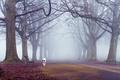 Картинка осень, деревья, туман, путь, собака, скамейки