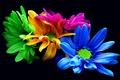 Картинка цветы, букет, хризантемы, фильтр