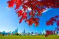 Картинка осень, небо, листья, город, дома, Чикаго, США