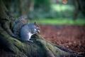 Картинка грызун, белка, животное, дерево, природа, осень