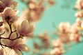 Картинка макро, природа, Цветы
