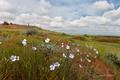 Картинка трава, цветы, тамань