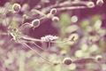 Картинка цветок, трава, растение, лепестки