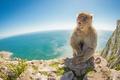 Картинка море, природа, гора, Barbary Macaque