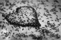 Картинка фон, сердце, муравьи, сердечко