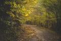Картинка солнечный свет, дорога, деревья, осень, листья
