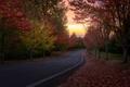 Картинка дорога, деревья, осень, закат