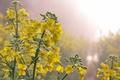 Картинка природа, весна, цветы