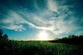 Картинка небо, трава, солнце