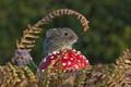 Картинка гриб, мышь, мухомор, мышонок