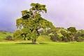 Картинка зелень, поле, трава, дерево, холмы, пастбища