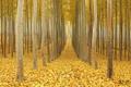 Картинка осень, лес, листья, путь, ветви
