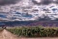 Картинка дорога, небо, облака, горы, виноградники