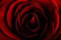 Картинка роза, цветок, фон, макро