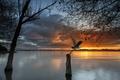 Картинка закат, природа, озеро, птица