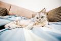 Картинка кошка, взгляд, дом
